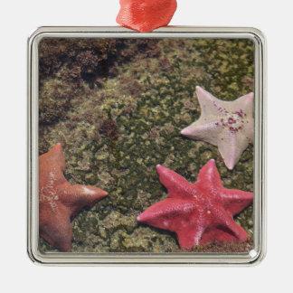 Living starfish (4).JPG Metal Ornament