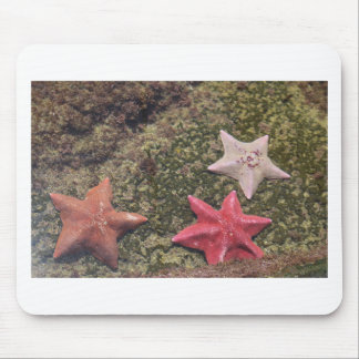 Living starfish (4).JPG Mouse Pad