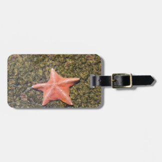 Living starfish.JPG Bag Tag