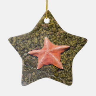 Living starfish.JPG Ceramic Ornament