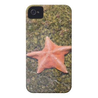 Living starfish.JPG iPhone 4 Covers