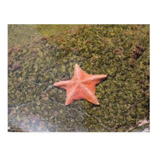 Living starfish.JPG Postcard