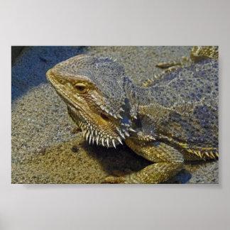 Living Under Fire - Bearded Dragon Poster