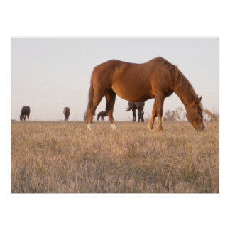 Living wild and horsing around poster