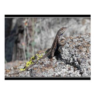 Lizard at Big Tom's Place. Postcard
