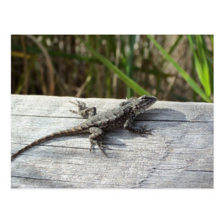 Lizard At Henlopen, Delaware Postcard