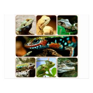 Lizard Collage Postcard