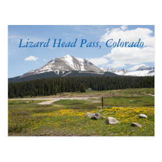Lizard Head Pass, Colorado Postcard