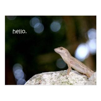 Lizard hello postcard