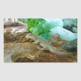 Lizard in a Terrarium