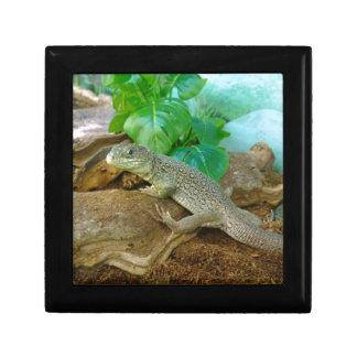 Lizard in a Terrarium Gift Boxes