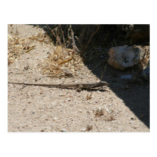 Lizard in Arizona desert postcard