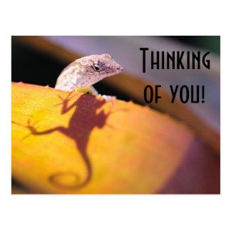 lizard in the bromeliads postcard