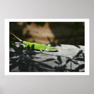 Lizard in the scrapwood poster