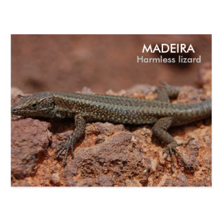 Lizard, Madeira Postcard