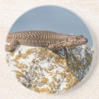 lizard on rock coasters