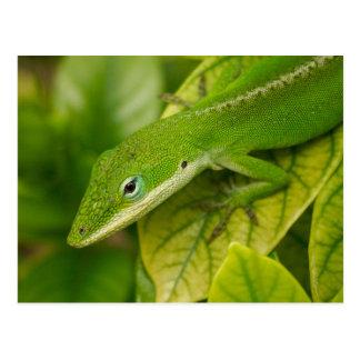 Lizard Postcard 01