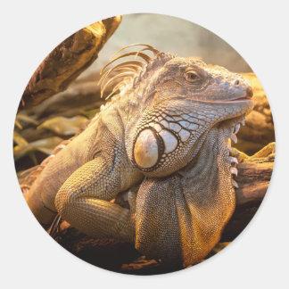 Lizard Up Close Round Sticker