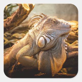 Lizard Up Close Square Sticker