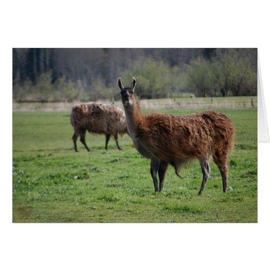 Llama Country Card
