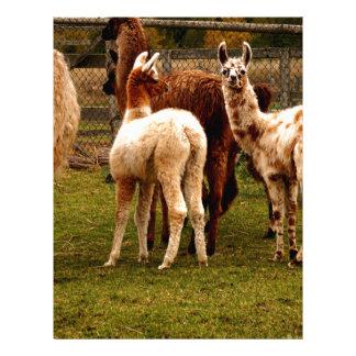 Llama family letterhead