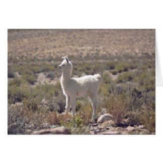 Llama Greeting Card, Blank Card