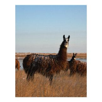 Llama Guardian Custom Letterhead