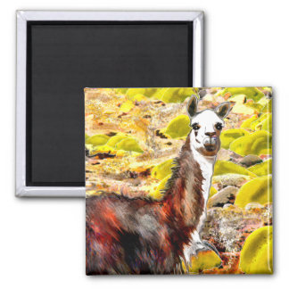 Llama in Andes Mountains Peru Square Magnet