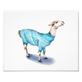 Llama in Blue Sweater Photo Print