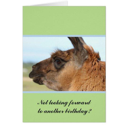 Llama looking left-Brown llama in a field Card