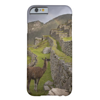 Llama stands on agricultural terraces with barely there iPhone 6 case
