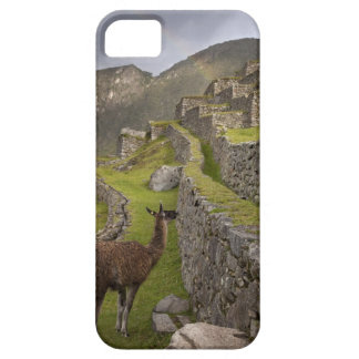 Llama stands on agricultural terraces with iPhone 5 cover