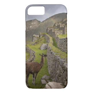 Llama stands on agricultural terraces with iPhone 7 case