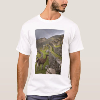 Llama stands on agricultural terraces with T-Shirt