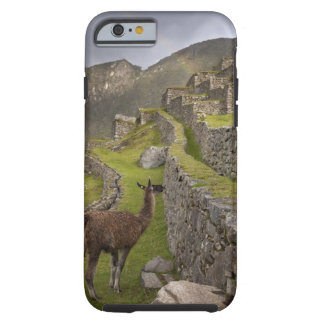 Llama stands on agricultural terraces with tough iPhone 6 case