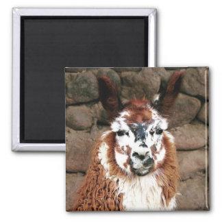 llama stare square magnet