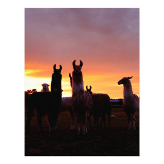 Llama Sunrise Custom Letterhead