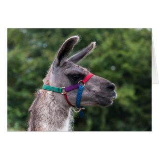 Llama superiority card
