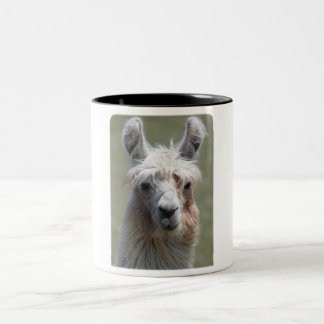 Llama!!! Two-Tone Coffee Mug