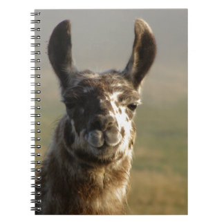 Llama Watch Notebooks