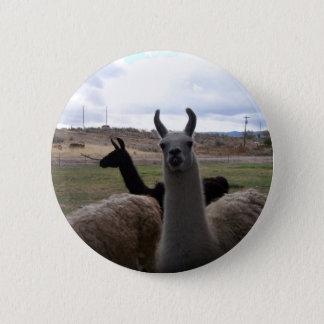 Llamas 2 Inch Round Button
