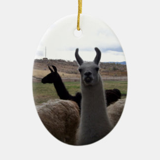 Llamas Ceramic Oval Ornament