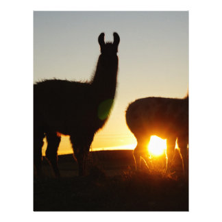 Llamas dramatic sunset letterhead