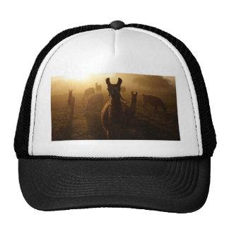 Llamas in the Mist Trucker Hat