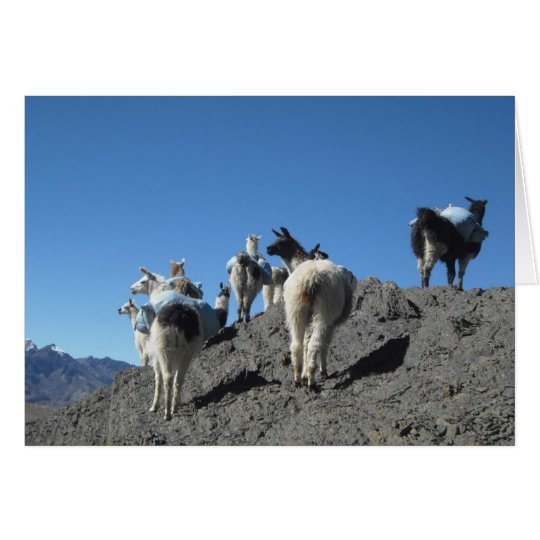 Llamas Pack Herd Travel in Bolivia Andes Mountains Card