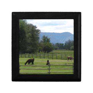 Llamas pastured in a mountain valley gift box