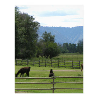 Llamas pastured in a mountain valley letterhead
