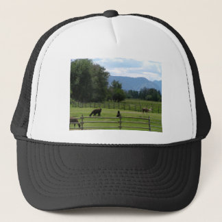 Llamas pastured in a mountain valley trucker hat