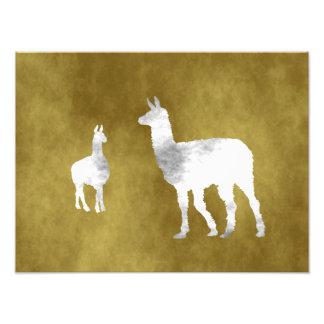 Llamas Photo Art