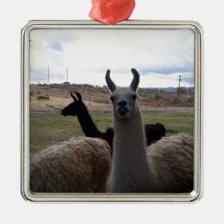 Llamas Silver-Colored Square Ornament
